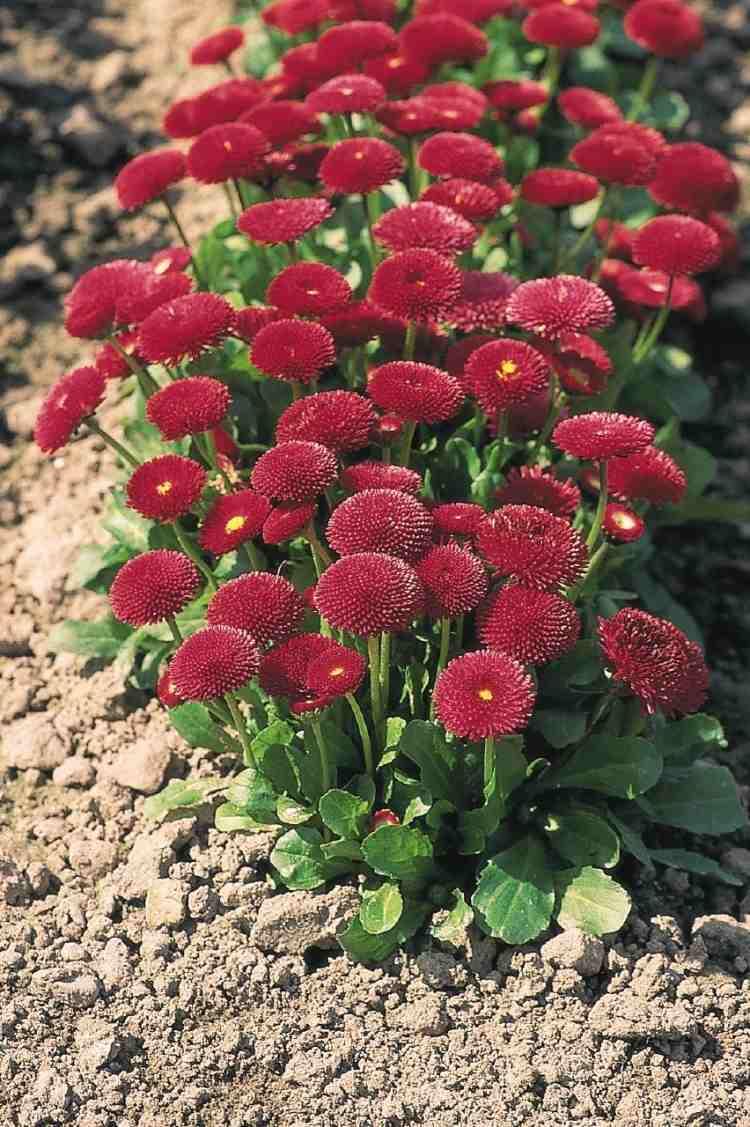 Pflegeleichte Grabbepflanzung  Tipps und Ideen