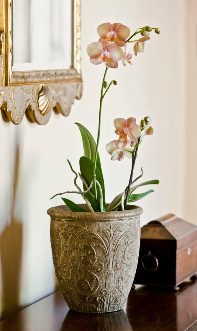 zyperngras wohnzimmer trend basteln mit orchideen pflanzenfreude. Black Bedroom Furniture Sets. Home Design Ideas