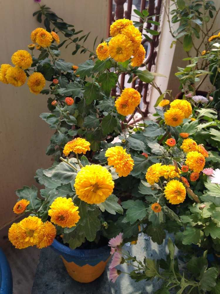 Beliebte Herbstblumen fr Balkon  8 Balkonbepflanzung Ideen