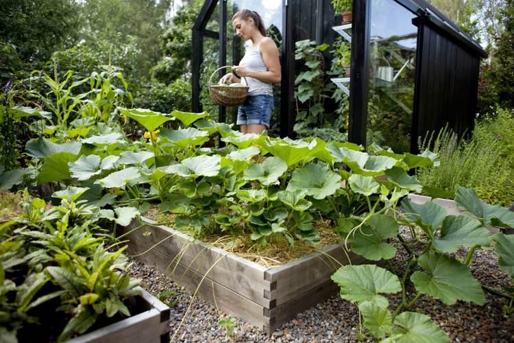 Hochbeet Bepflanzen Gemuse Kurbis Stroh Mulch