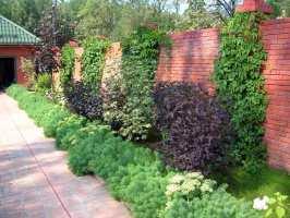 Deko Ideen Welche Pflanzen als Sichtschutz für Garten und ...