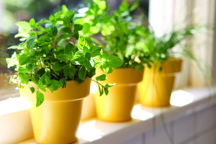 Kräuter Anpflanzen Samen