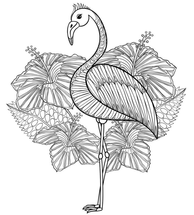 Malvorlage Flamingo Zum Ausdrucken Kinder Ausmalbilder