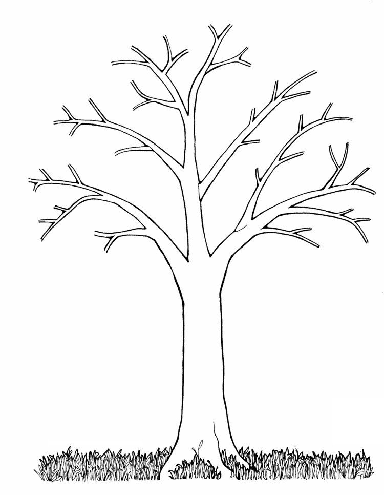 Malvorlage Baum Ohne Blätter