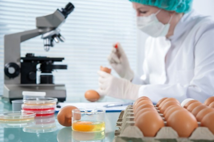 laboratory assistant examines the content of eggs