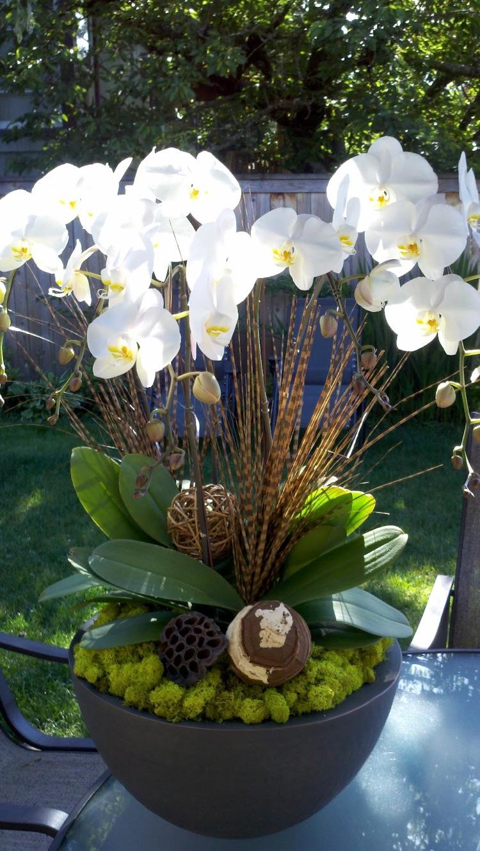 Entretien Des Orchides Savoir Tout Sur Ces Fleurs Exotiques