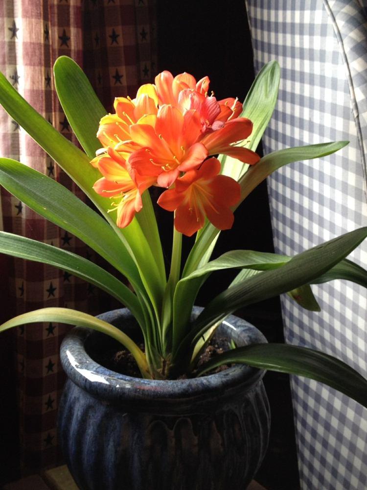 Plantes dintrieur  fleurs ncessitant peu de lumire