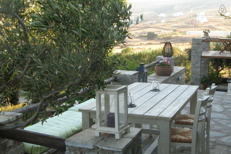 Olivier en pot pour la terrasse ou le balcon conseils et photos