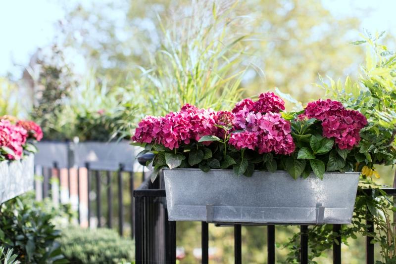 Fleurs de balcon en plein soleil  ides sur les arrangements