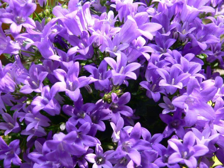 S Design Exterieur Balcon Plantes Retombantes Fleurs Vivaces