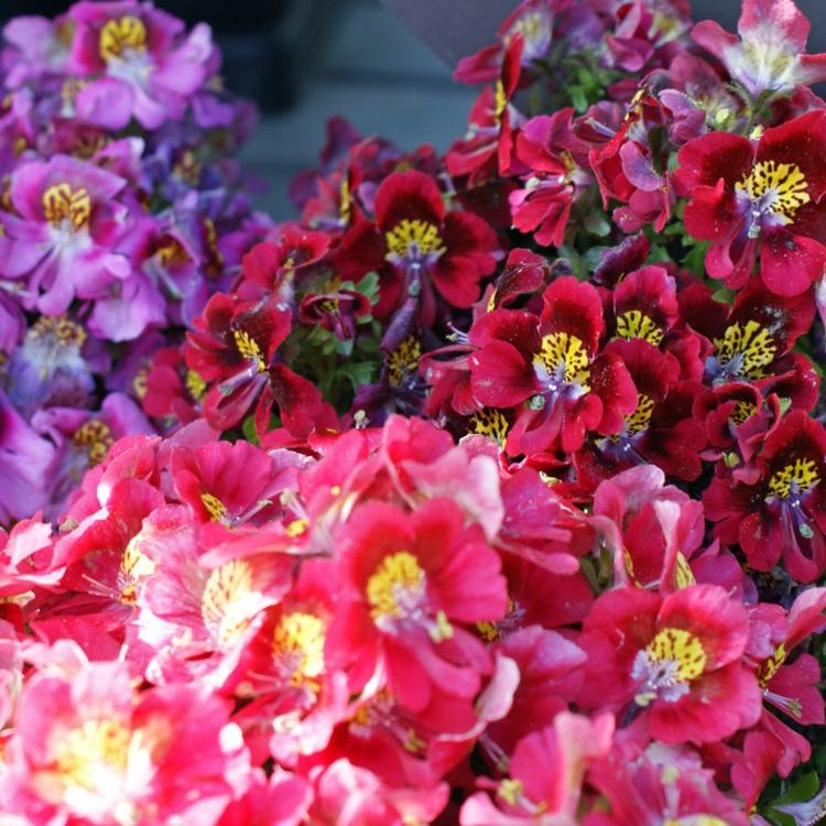 design exterieur balcon plantes retombantes fleurs vivaces
