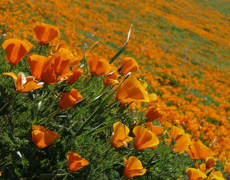 plante plein soleil 12 plantes