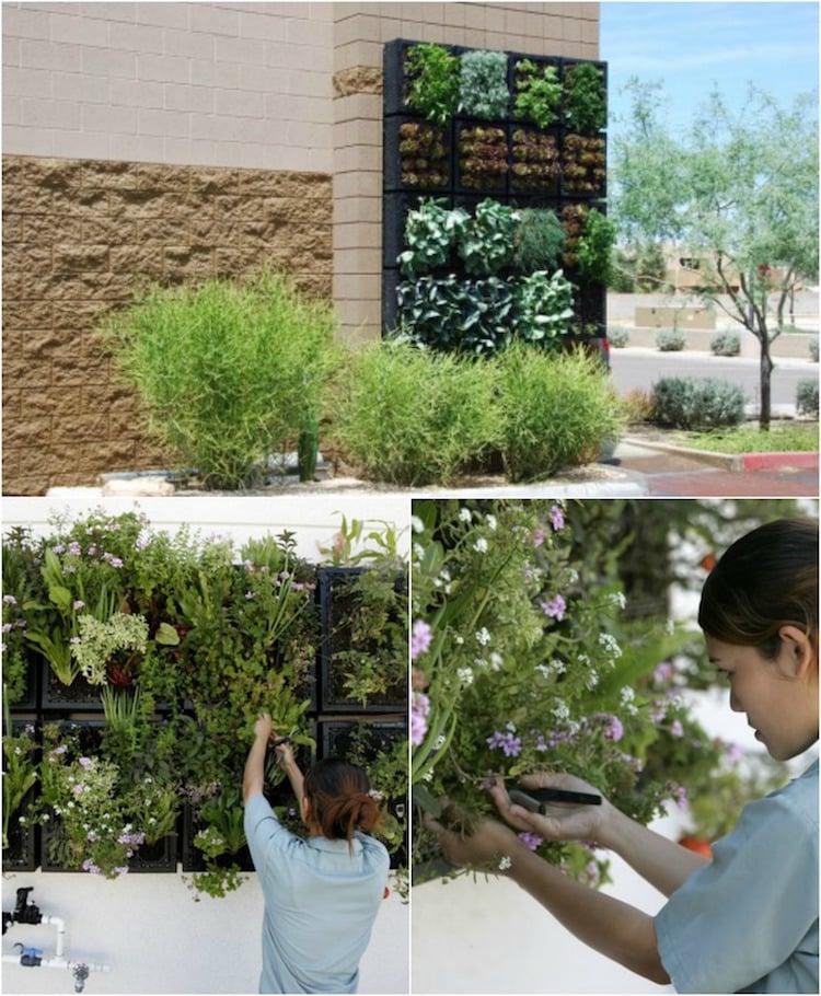 Faire Un Mur Végétal Extérieur : faire, végétal, extérieur, Construire, Végétal, Extérieur, Conseils, Types, Entretien
