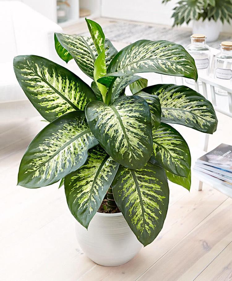 plantes pour bureau faciles d entretien