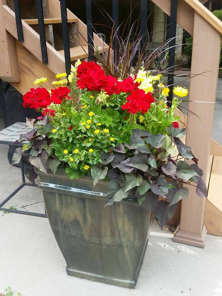 fleurs retombantes pour jardinieres