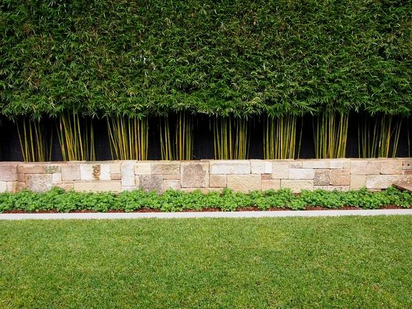 privacy plants living fence