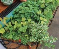 How to grow a herb garden  design ideas for outdoors and ...