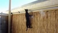 Cat proof garden ideas  keep your pets inside your backyard