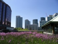 Green roof ideas  environmentally friendly gardens of the ...
