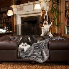 What Is The Best Living Room Furniture For Dogs Modern Decor Couches And Cool Dog Bed Ideas Your Pets
