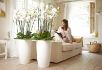 Orchid pots  how to choose the best pots for orchids?