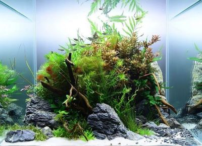 Aquascaping styles, design ideas and mistakes to avoid