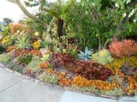 Succulent gardens  landscaping ideas for your front and ...