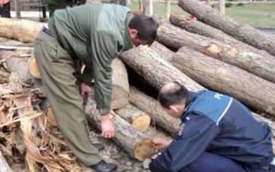 Tineri prinși de către polițiști în timp ce transportau lemn fără documente de proveniență