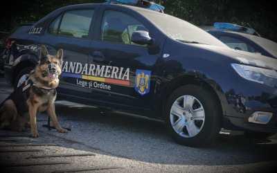 Câinii de serviciu- partenerii de încredere ai jandarmilor băcăuani