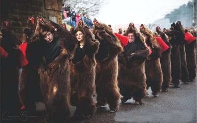 """""""Urșii din Comănești """"hibernează în această iarnă"""
