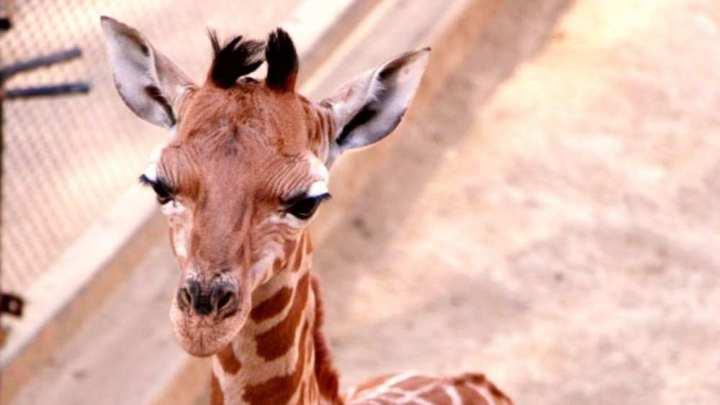 Valentino nació en Zoológico Chapultepec