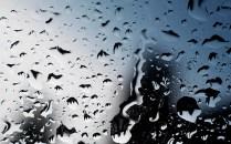 Vreme rea în Timiș