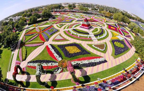 miracle garden2