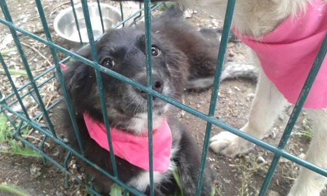 targ adoptii5