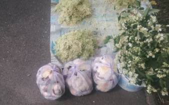 Ciuperci vândute în piață, la Timișoara