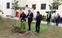 Președintele Iohannis a plantat un arțar la CD Loga