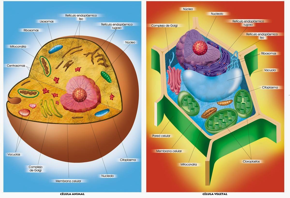 Cómo Funcionan Las Células La Célula Como Un Sistema