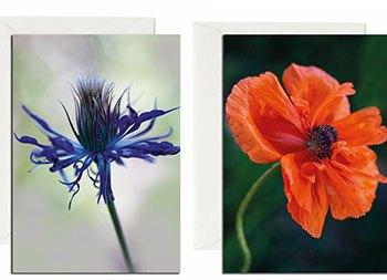 Flower notecards by Debbie Devereaux