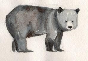 bear sketch 6: huh? bear