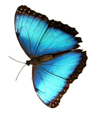 butterfly image 3 - Recipes