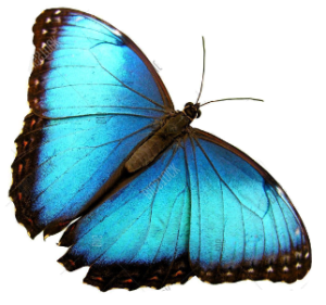 butterfly image 4 - butterfly-image-4