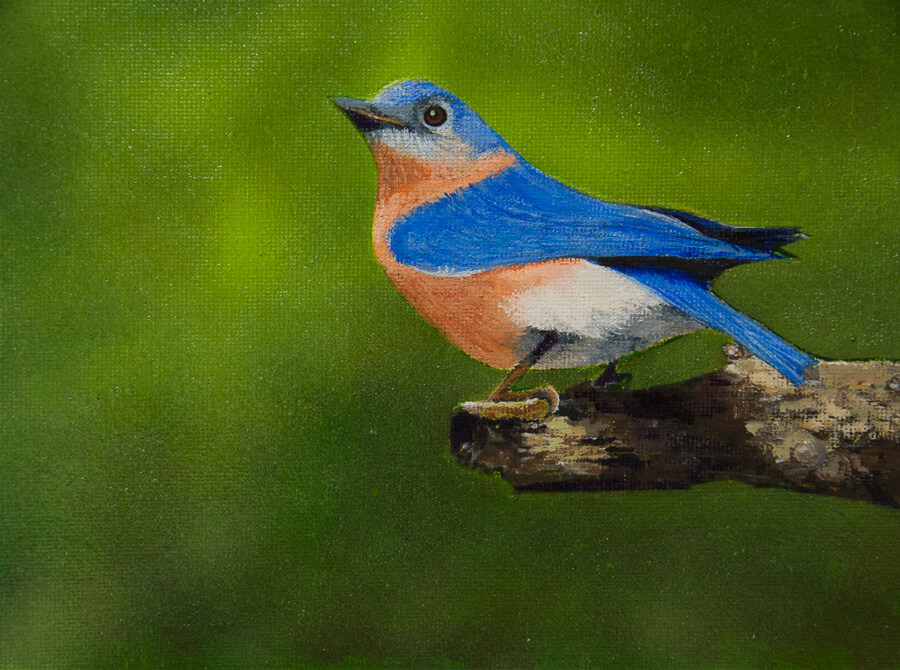Eastern Bluebird Painting