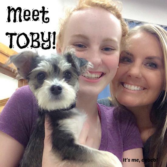 Meet Toby!