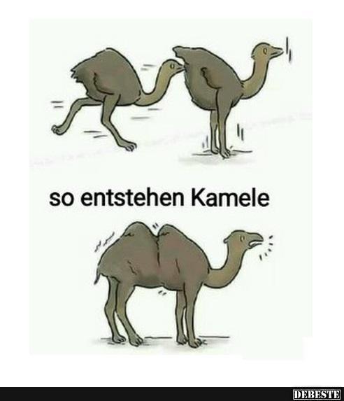 So Entstehen Kamele  Lustige Bilder, Sprüche, Witze