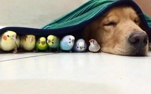 Entrañable sesión fotográfica sobre la amistad entre un perro, ocho pajaritos y un hámster
