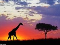 Espectaculares fotografías a contra luz de animales de todo el mundo.