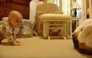 [Video] Bebé y perrito de la familia se reúnen por primera vez y esto es lo que sucede