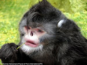 Un informe ha puesto de relieve 200 especies nuevas encontradas en el Himalaya oriental