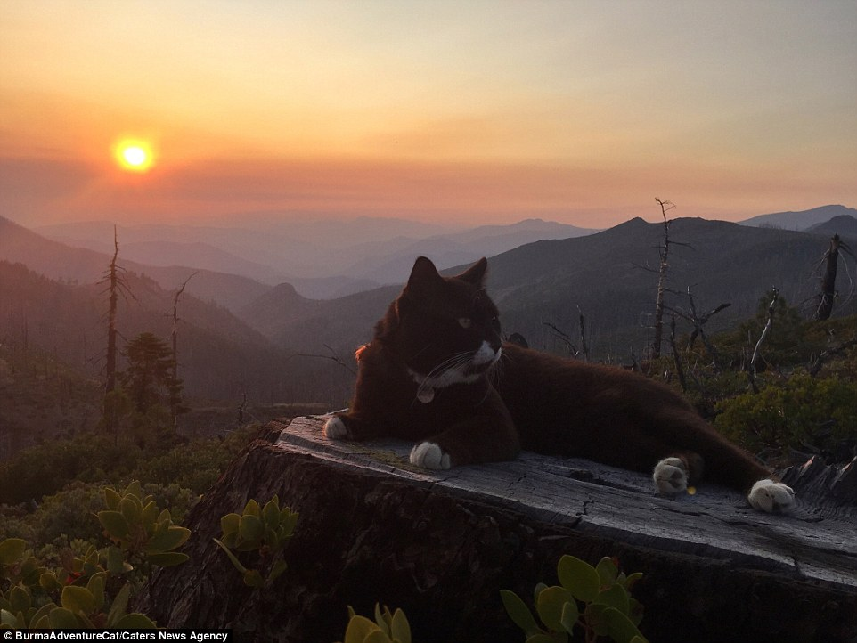 2D96EC4900000578-3281012-The_original_adventure_cat_settles_down_at_sunset_in_Oregon_afte-a-27_1445349720914