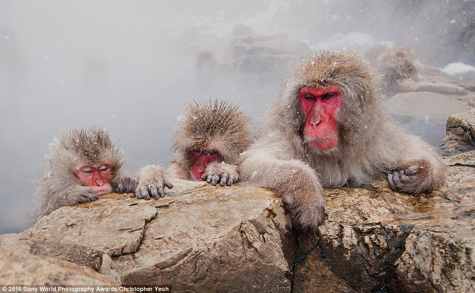 2DF3348000000578-3296769-These_monkeys_were_caught_having_a_soak_in_a_hot_spring_during_a-a-6_1446221757669